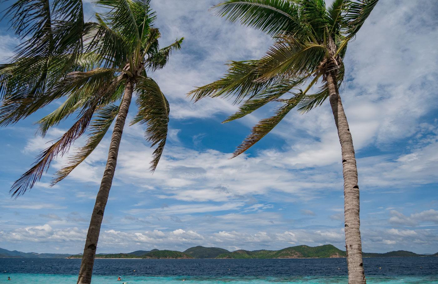 Palmen auf Banana Island auf den Philippinen