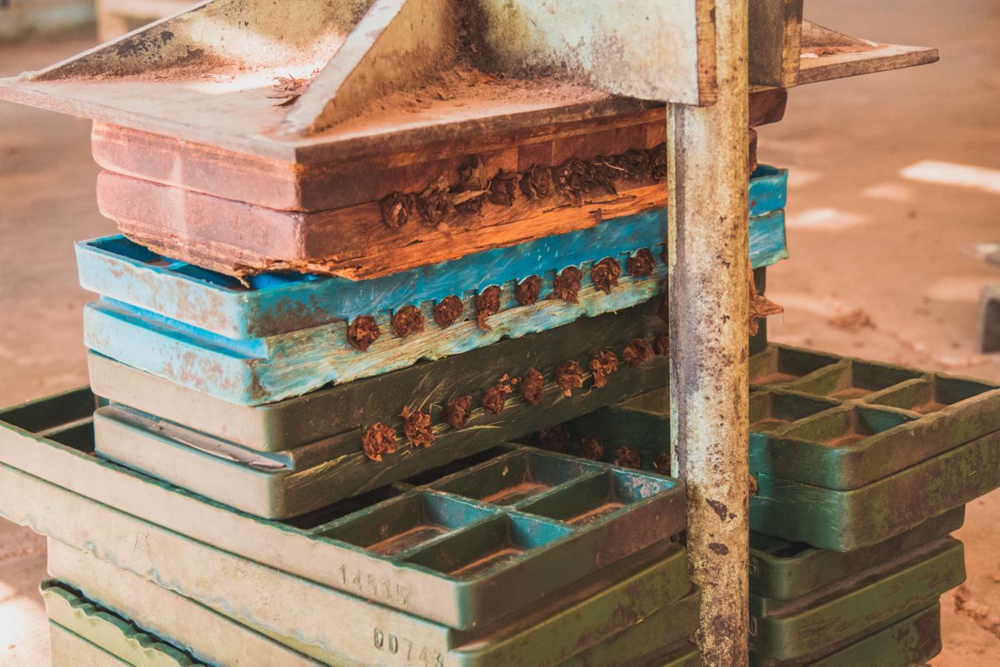 Zigarren werden gepresst in Trinidad