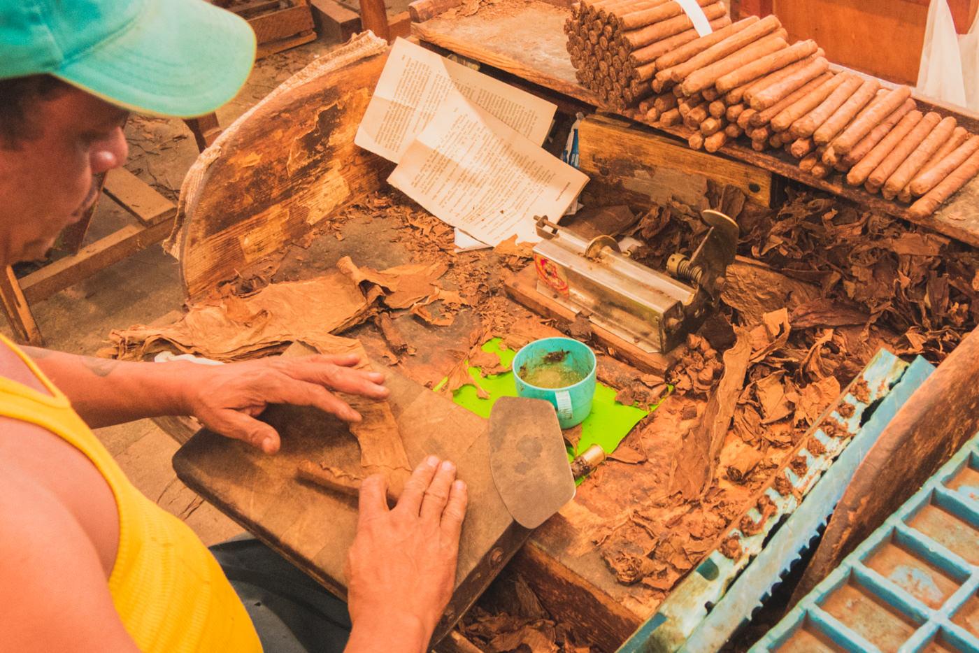 Mann rollt Zigarre in Zigarrenfabrik in Trinidad