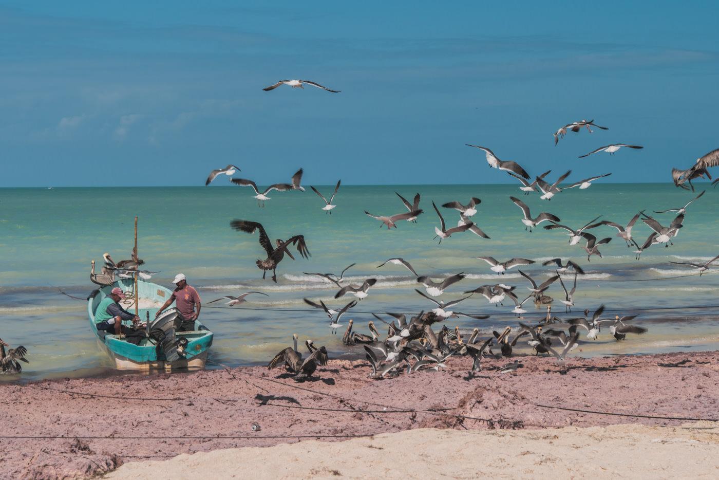 Fischer am Strand von Las Coloradas in Mexiko