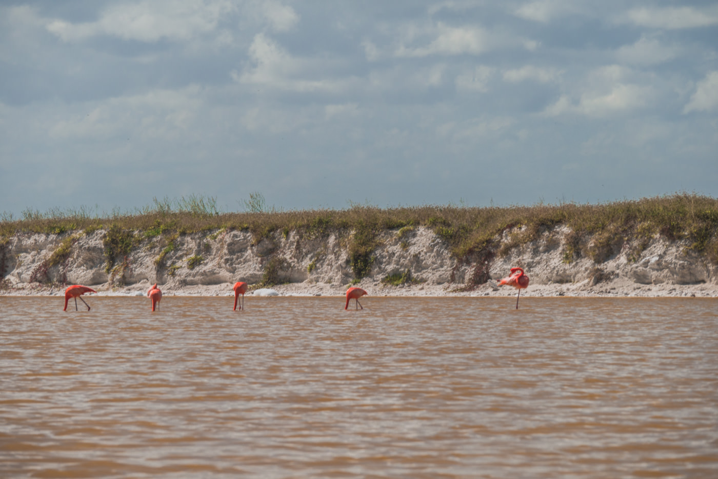 Flamingos in Las Coloradas in Mexiko