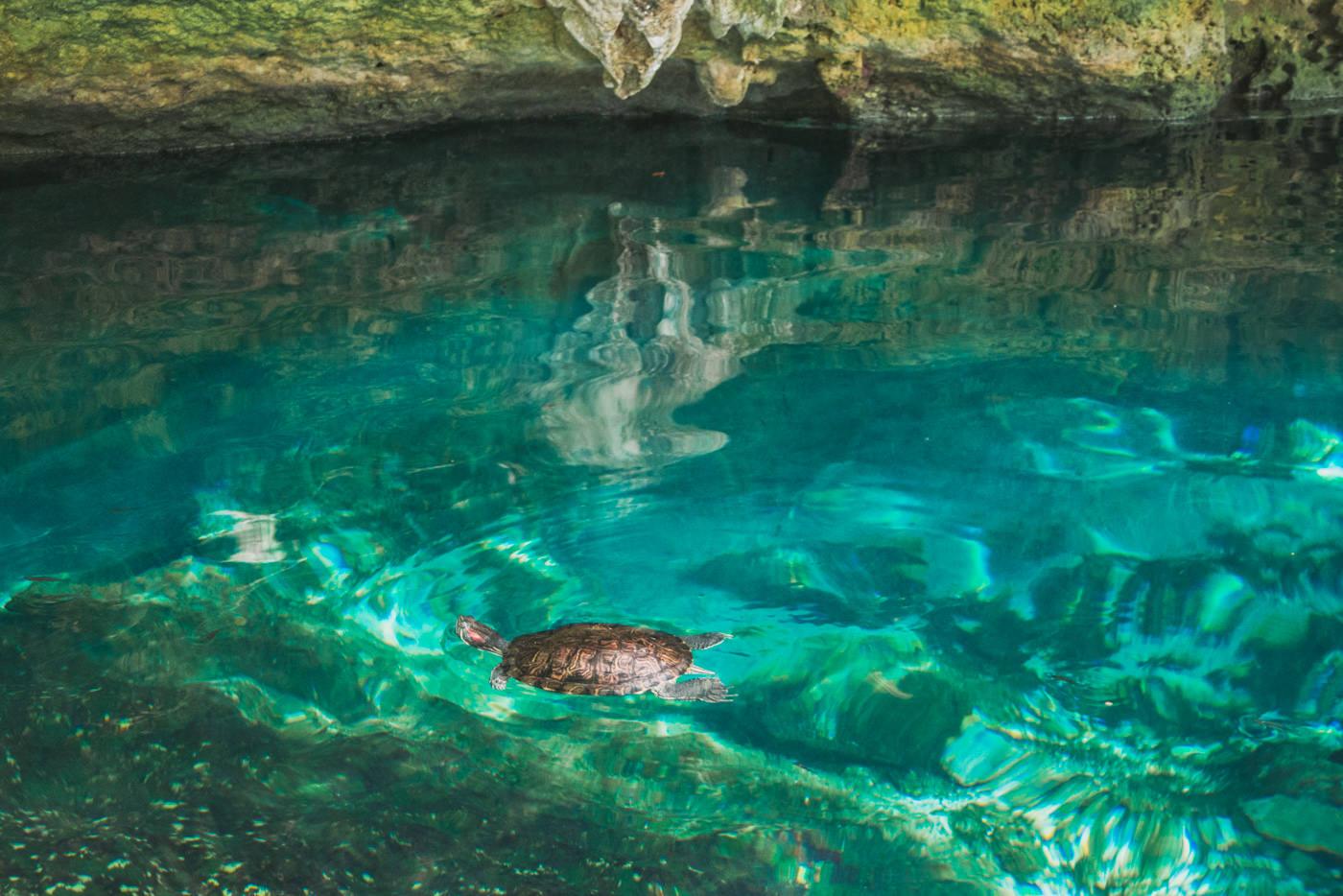 Schildkröte in der Grand Cenote bei Tulum