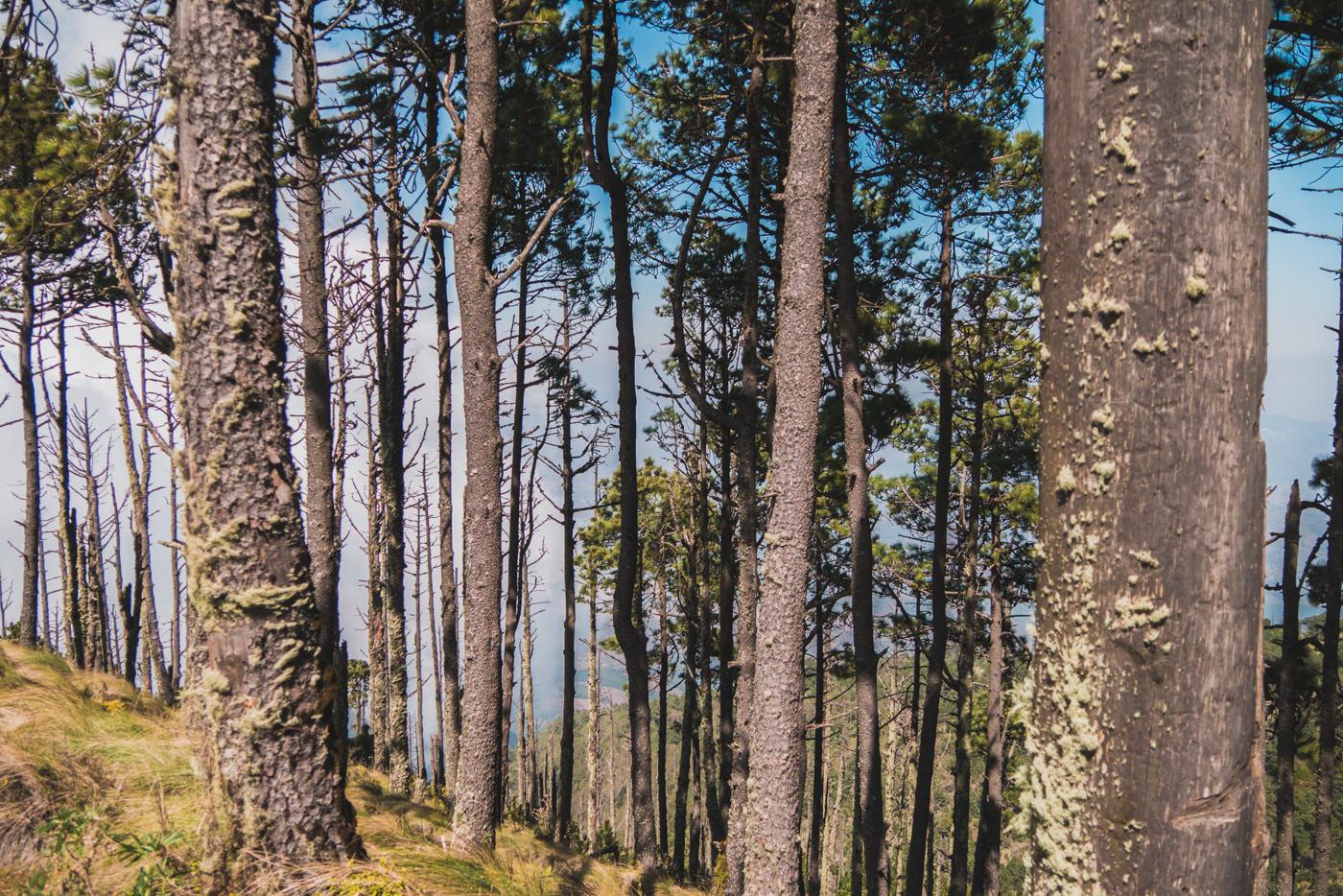 Waldstück auf dem Weg zum Basecamp des Acatenangos