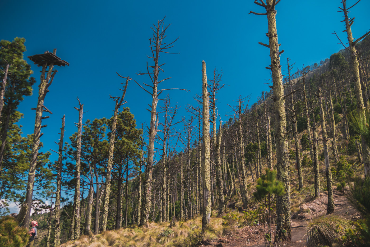Wald am Fuße des Vulkans Acatenango