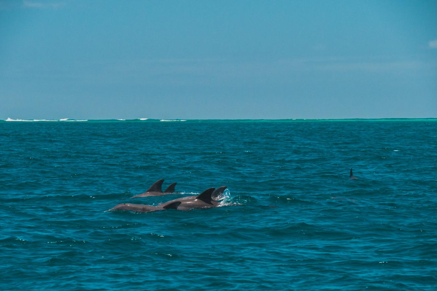 Delfine bei Bocas del Toro in Panama