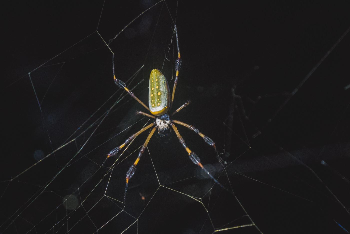 Spinne während der Nachtwanderung in Cahuita