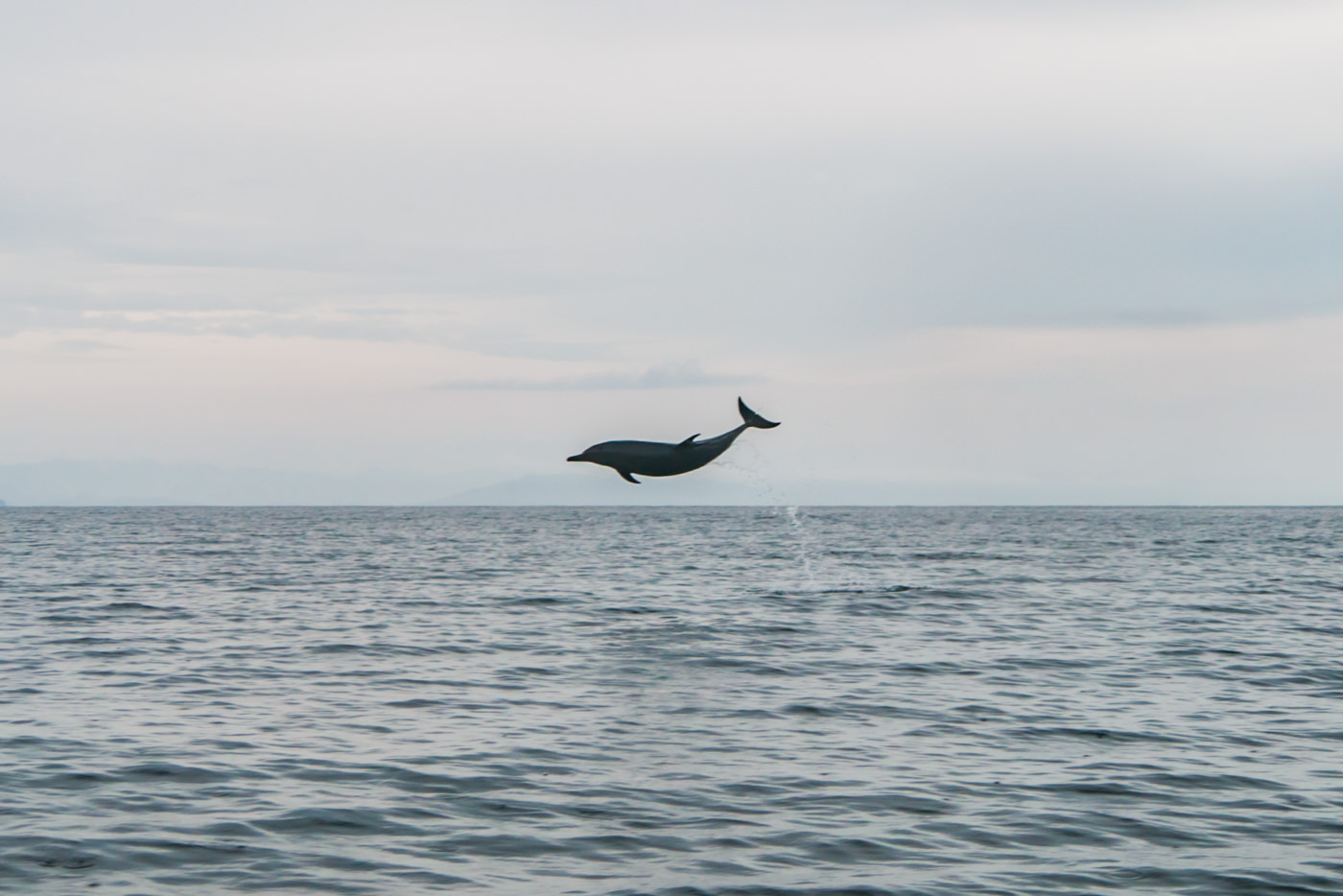 Springender Delfin im Coiba Nationalpark