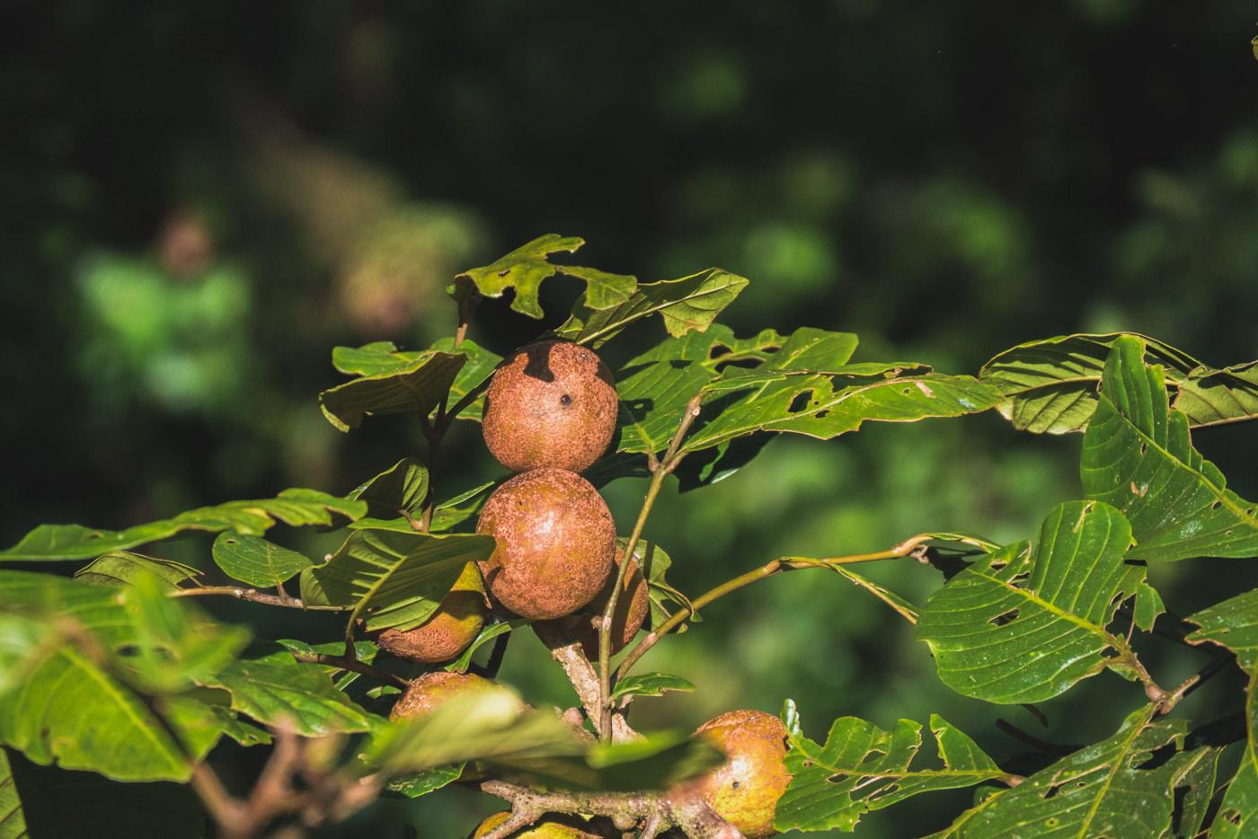 Fauna im Monteverde Nebelwald