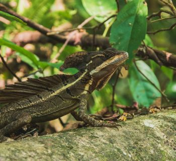 Grün, Grüner, Costa Rica