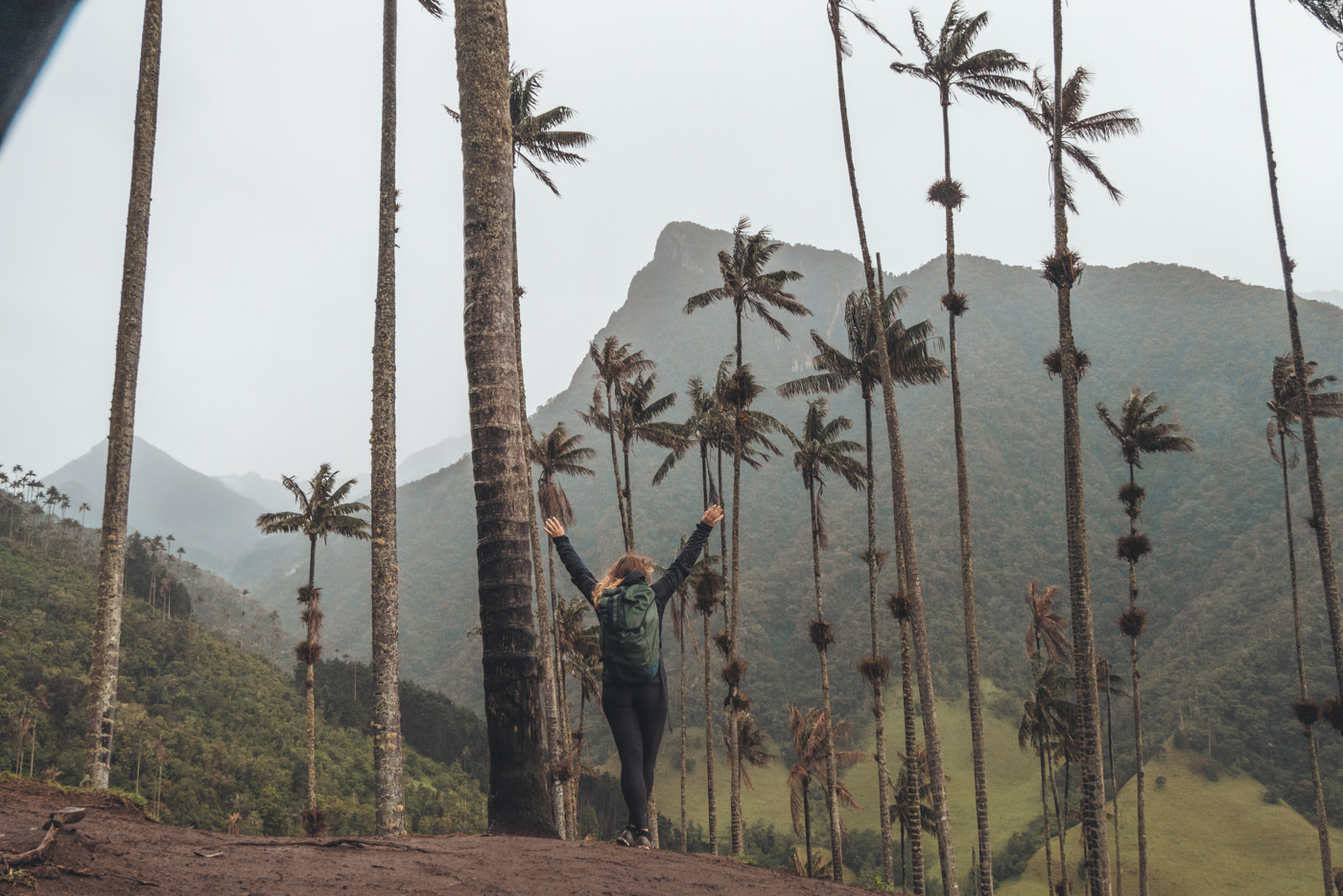Valle de Cocora – zwischen Wachspalmen & Regenwolken.