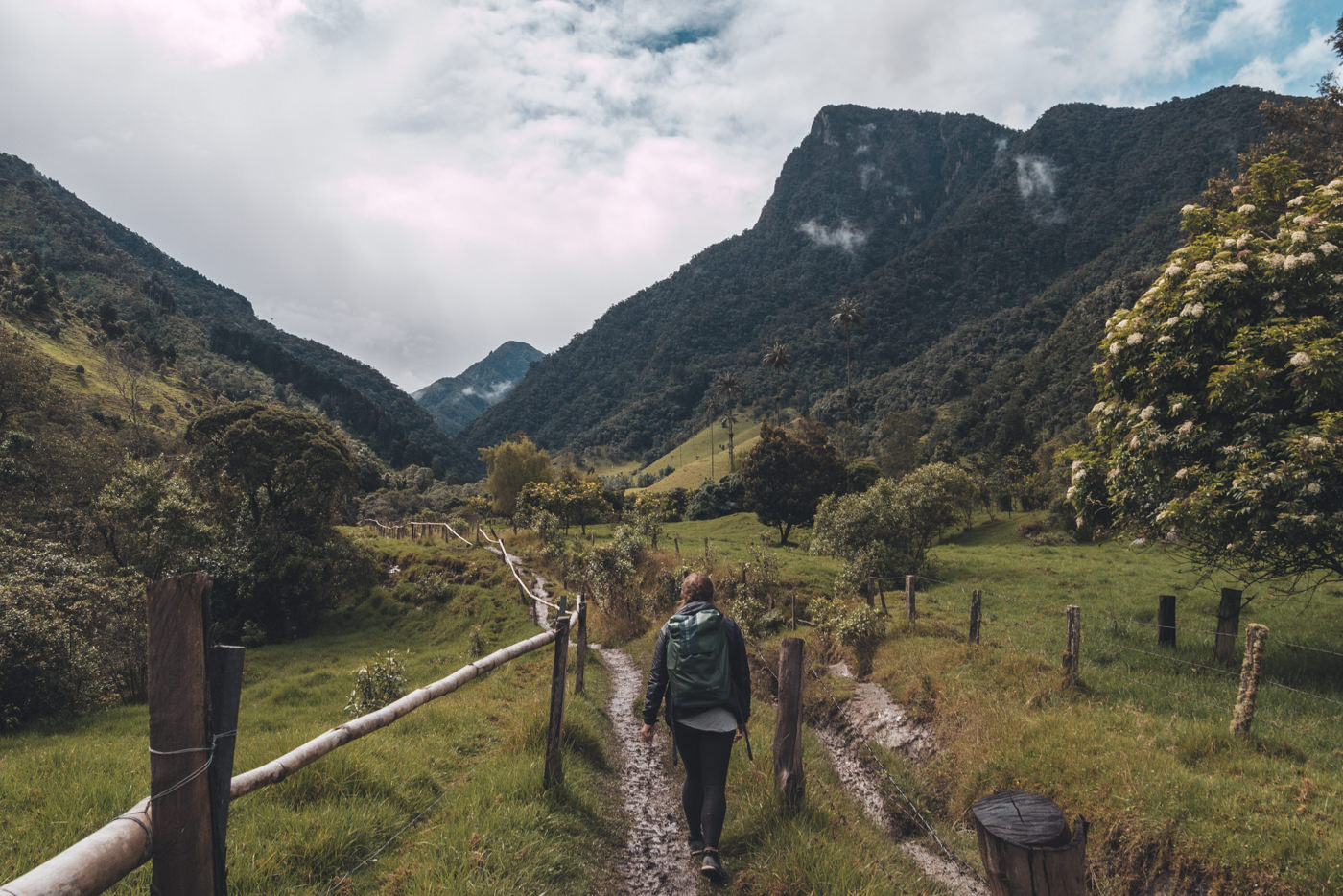 Wanderung durch das Valle de Cocora, Salento, Kolumbien