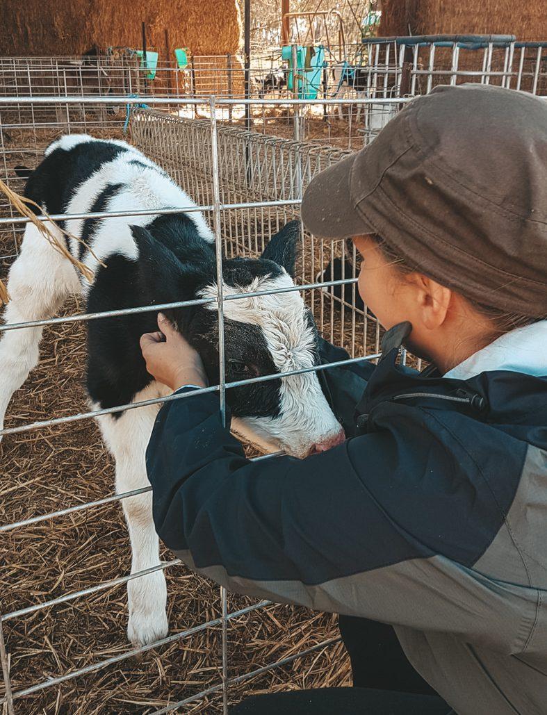 Julia mit Kalb auf der Farm