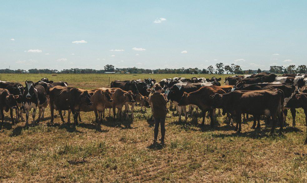 Julia mit den Kühen auf der Farm