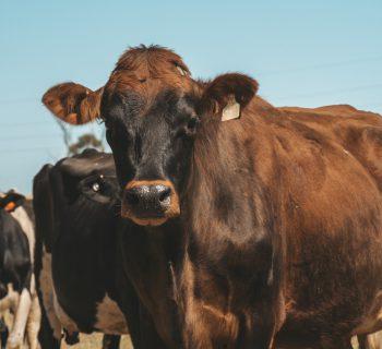 Vegan Dank Farmarbeit? Unsere Erfahrungen.