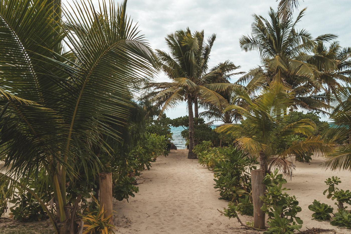 Palmen auf dem Weg an den Strand