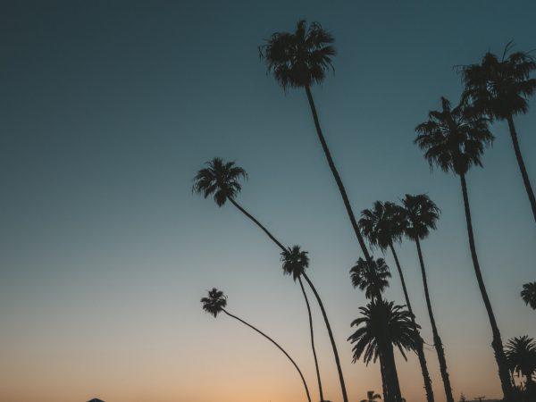 Palmen bei Los Angeles