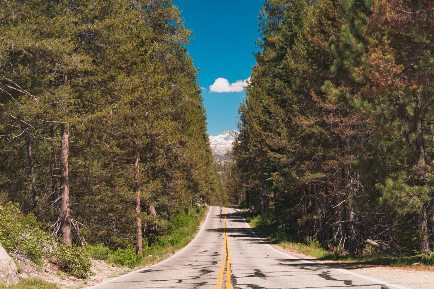 Straße im Yosemite Nationalpark