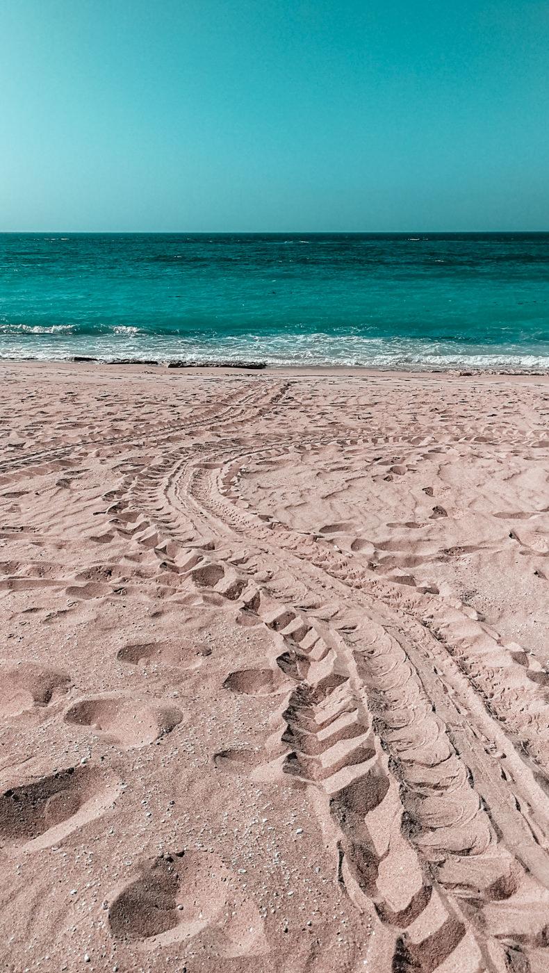 Spuren einer Meeresschildkröte an Land