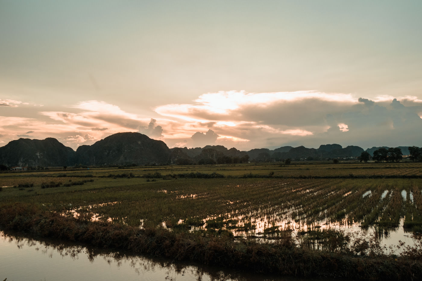 Reisfelder in der Ninh Binh Region in Vietnam