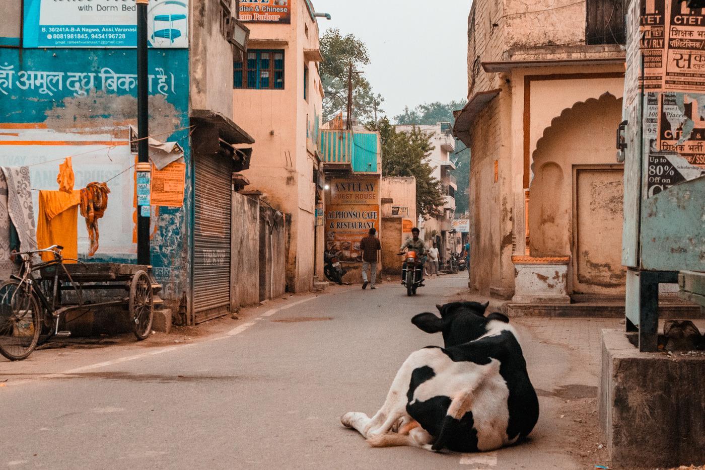 Indien – bunt, laut & faszinierend