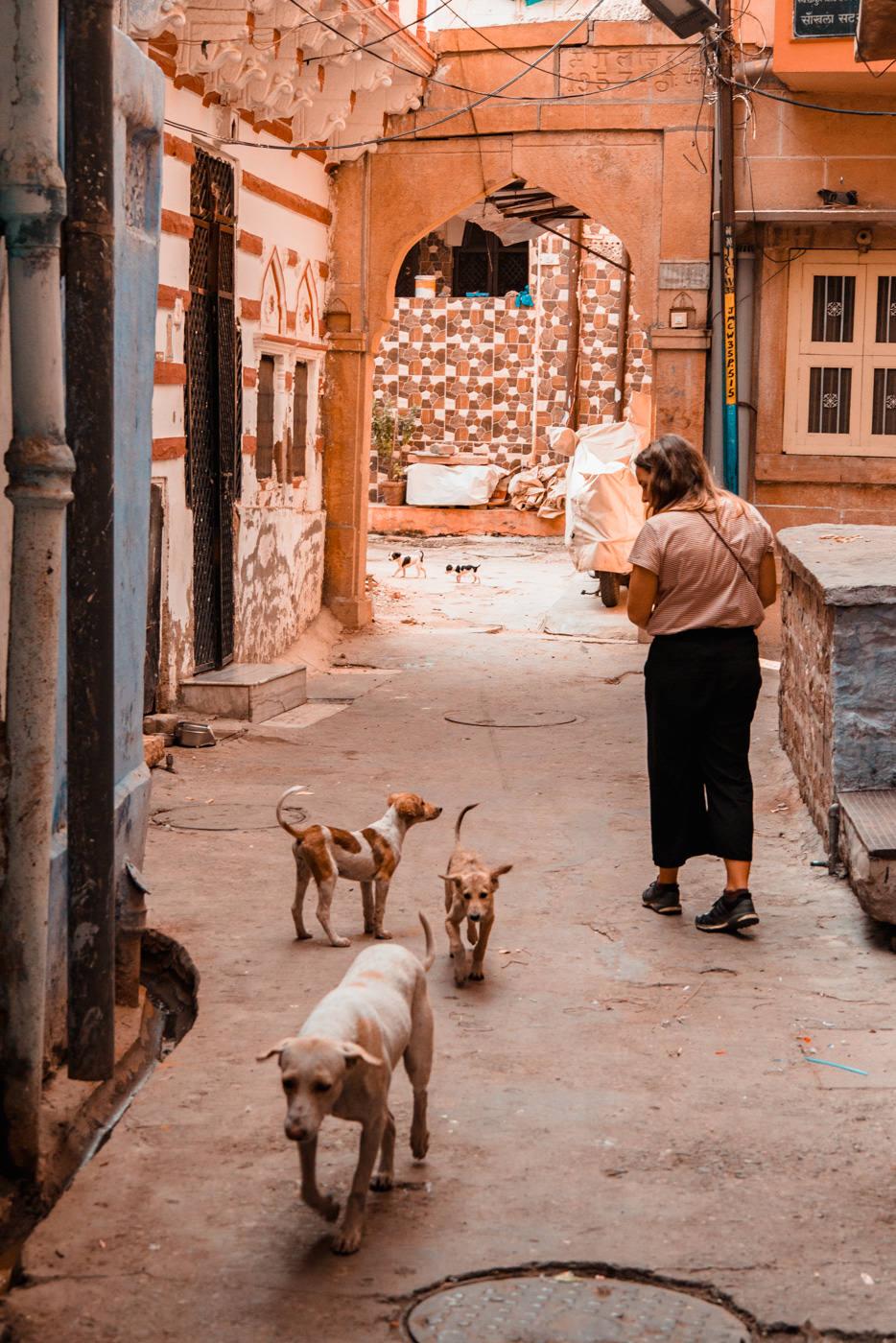 Hundewelpen in Gasse von Jodhpur